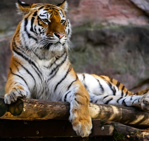 Embodying the Five Kung Fu Animals: Stripes